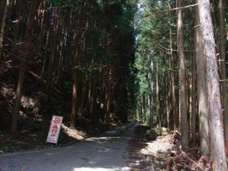 7月11日 記事用 山道.JPG